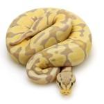 banana-blade-pastel
