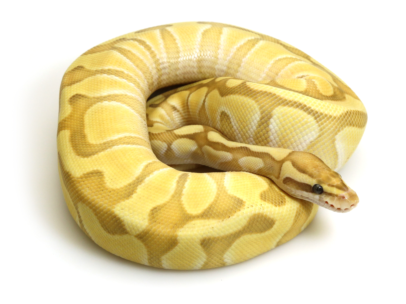 banana-butter-enchi