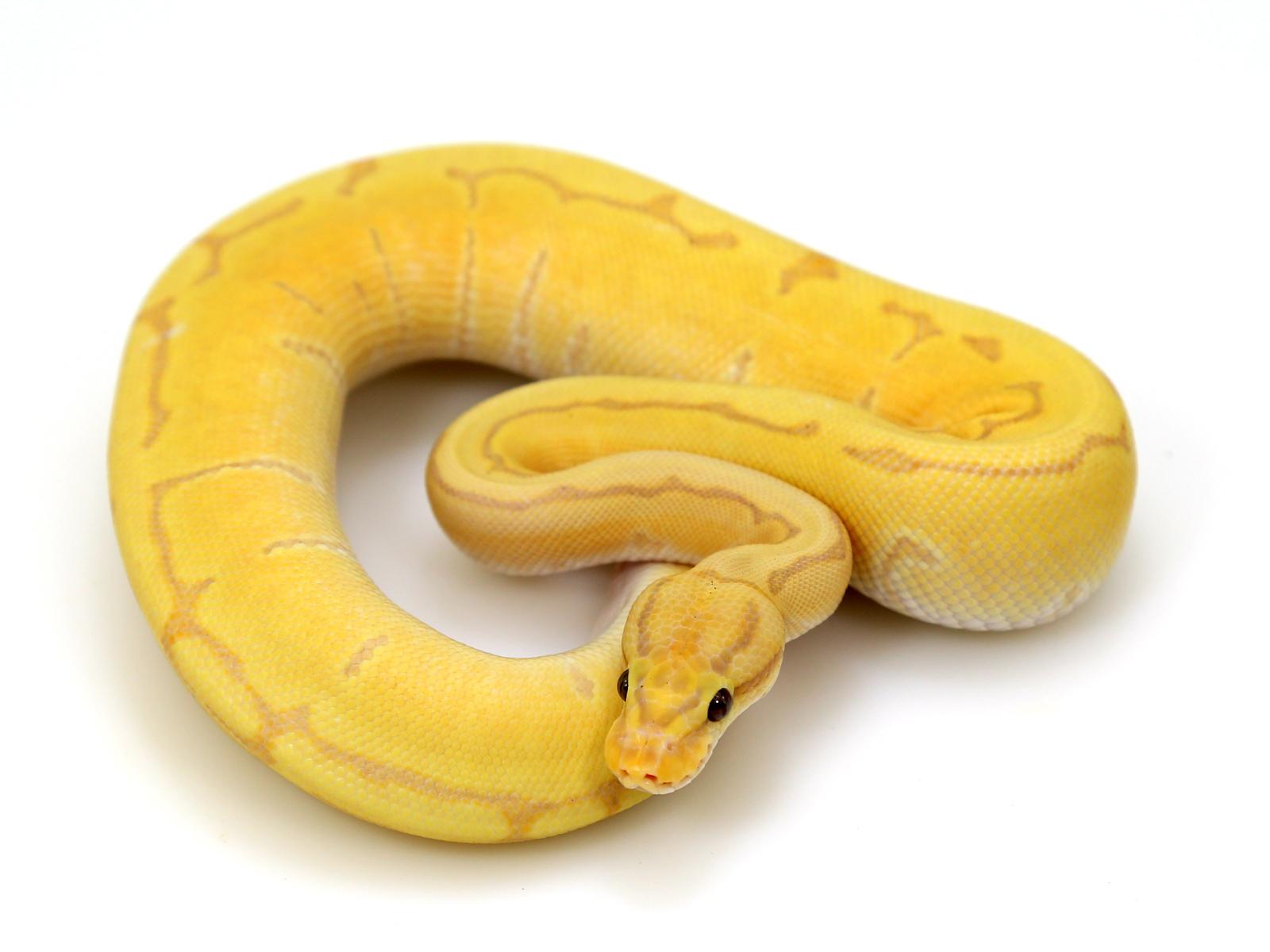 banana-pinstripe