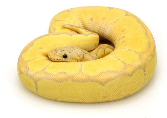 Banana Blade Pastel Clown