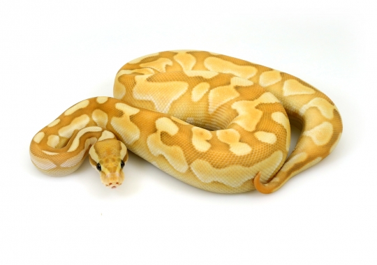 Banana Butter Cinnamon Enchi