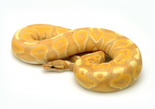 Banana Cinnamon Enchi