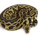 leopard-pastel