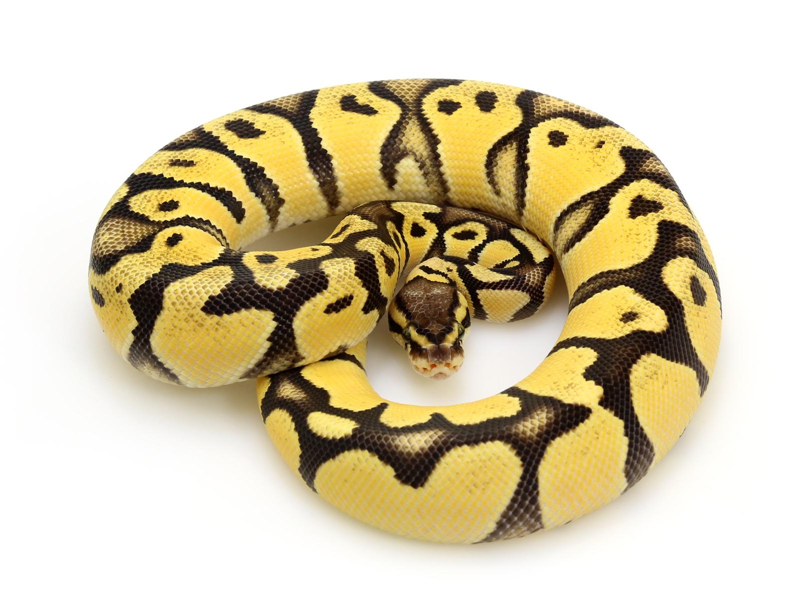 od-pastel-fire-vanilla