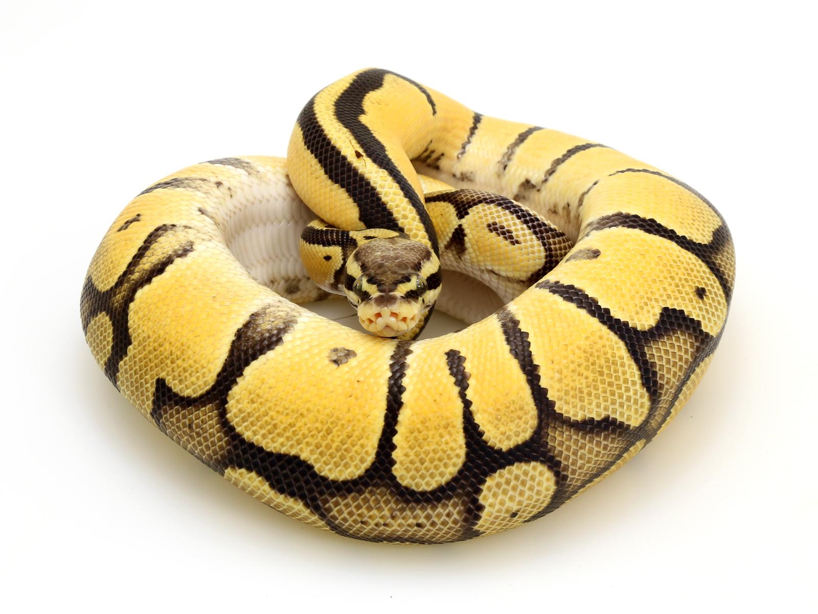 od-pastel-vanilla