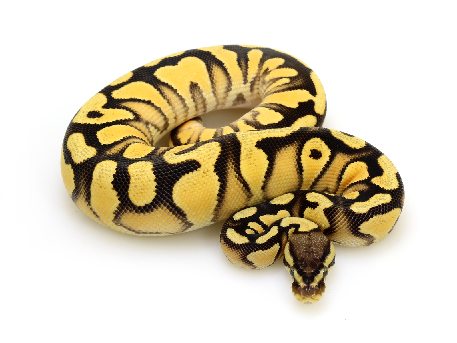 Why dream yellow 36