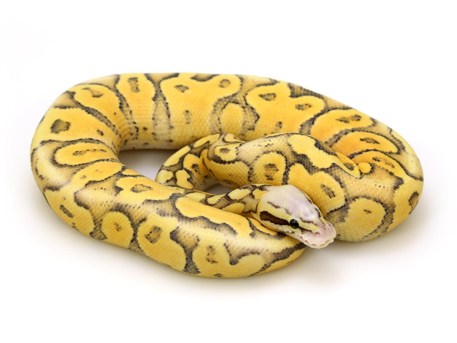 super-vanilla-pastel-ghost-col